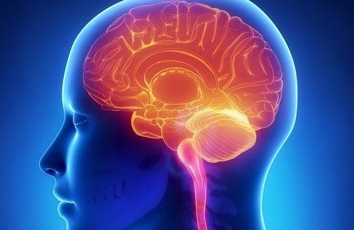 Astuces pour garder un cerveau jeune