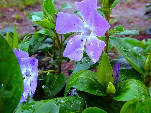 Les Fleurs de Bach permettent d'établir un équilibre émotionnel, donc aussi d'améliorer votre état de santé.