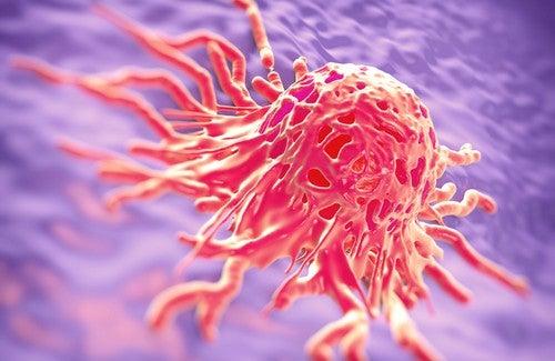 Les plantes médicinales contre le cancer