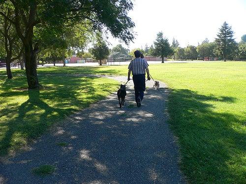 promenez votre chien pour perdre du poids
