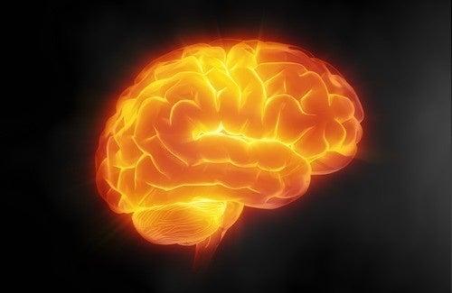 Sept conseils pour prendre soin de votre cerveau