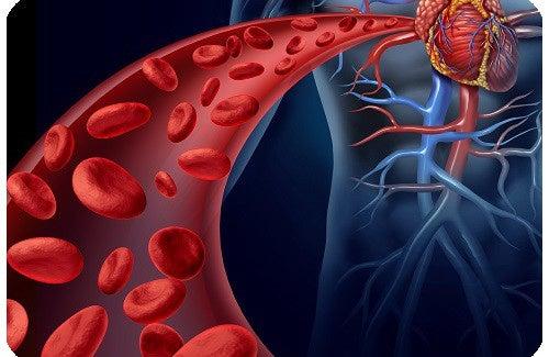 Traitements naturels contre l'hypertension et bonnes habitudes à suivre