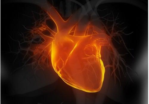 bienfaits du thé blanc : santé cardiaque