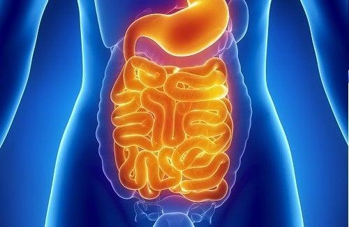 D'excellents aliments pour nettoyer l'intestin