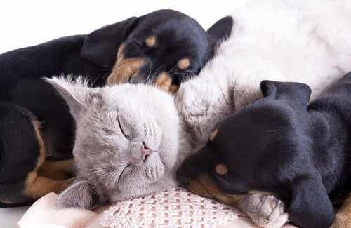 Les animaux de compagnie pour notre santé physique et mentale