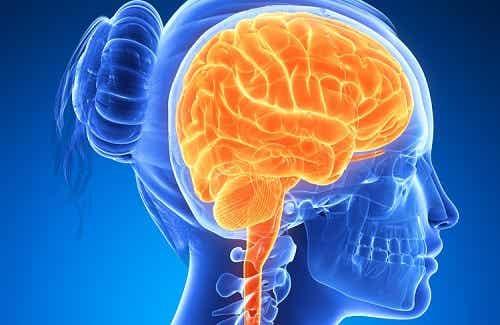 Des aliments pour stimuler le cerveau