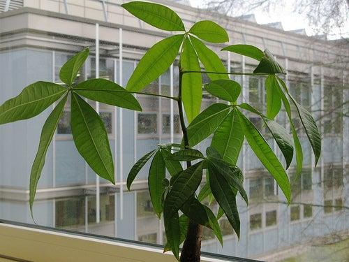 plantes 3