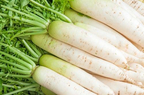 radis blanc