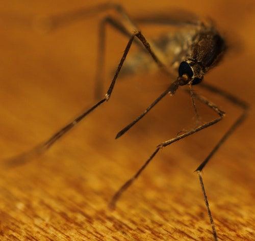produits anti-moustiques naturels