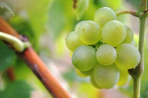 le raisin contre l acidité gastrique