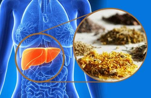 Des plantes médicinales pour purifier le foie — Améliore