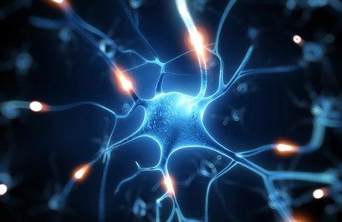 Le resvératrol : un excellent bouclier pour le cerveau ?