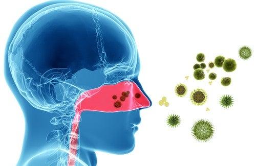 Remèdes naturels contre les allergies nasales