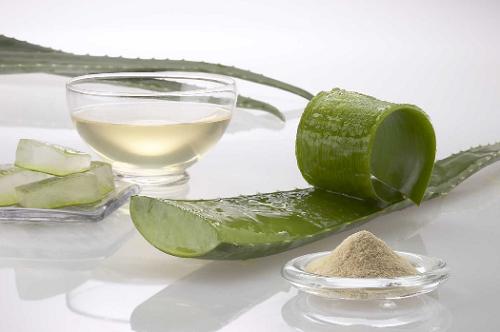 L'aloe vera, l'une des meilleures plantes pour perdre du poids.