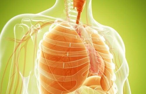Les remèdes naturels pour renforcer les poumons