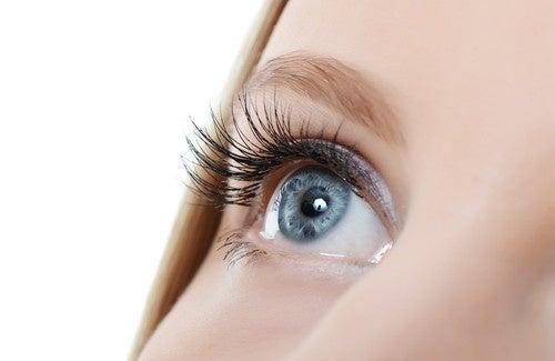 La transplantation des cheveu sur les sourcils de la photo
