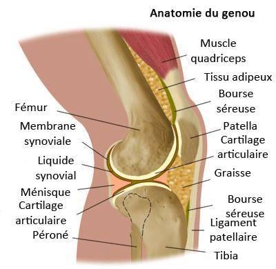Mal interieur cuisse gauche 28 images douleur nouvelle for Douleur au genou gauche interieur
