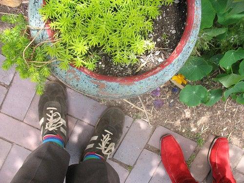 Plante extérieure mise dans le jardin.