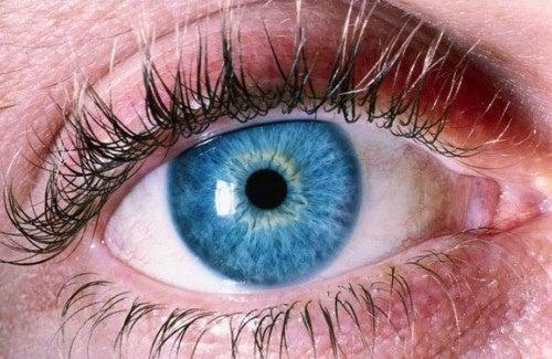 5 conseils pour prendre soin de votre vue