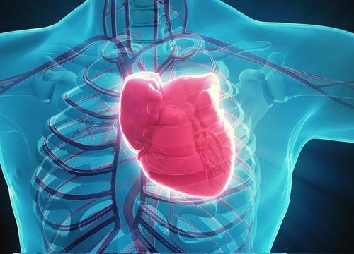 effet de la marche sur le coeur