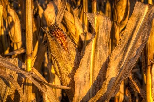 pop-corn au micro-ondes nocif pour la santé