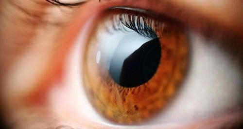 Exercices pour lutter contre la presbytie ou la fatigue de la vue