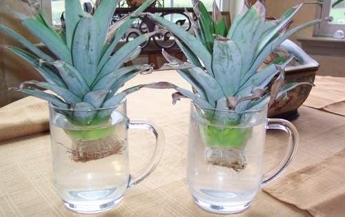ananas dans l'eau