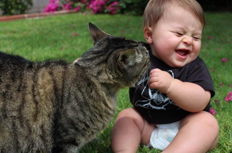 éliminer les tiques des animaux domestiques