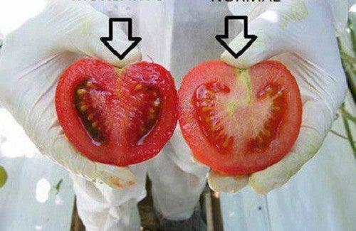 Quels sont les dangers des aliments génétiquement modifiés ?