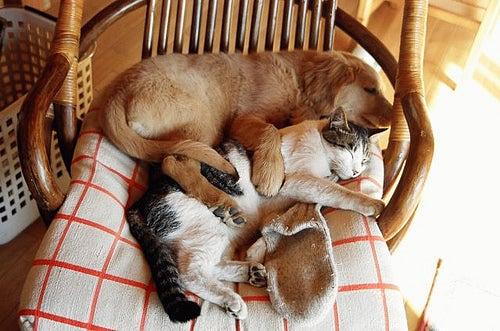 chien-chat-mizuo_fiat