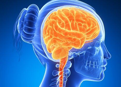 6 aliments qui stimulent le cerveau