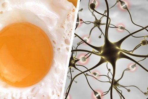 Aliments et conseils pour améliorer votre mémoire