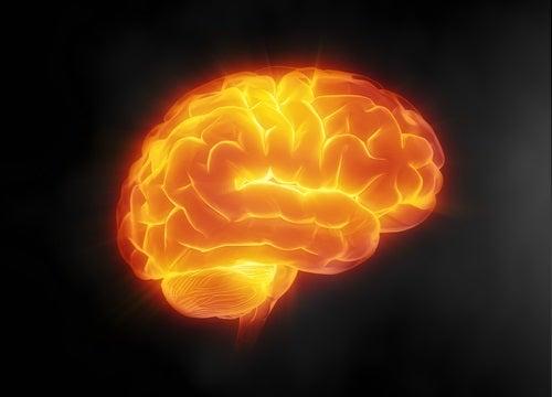 l'activation du cerveau