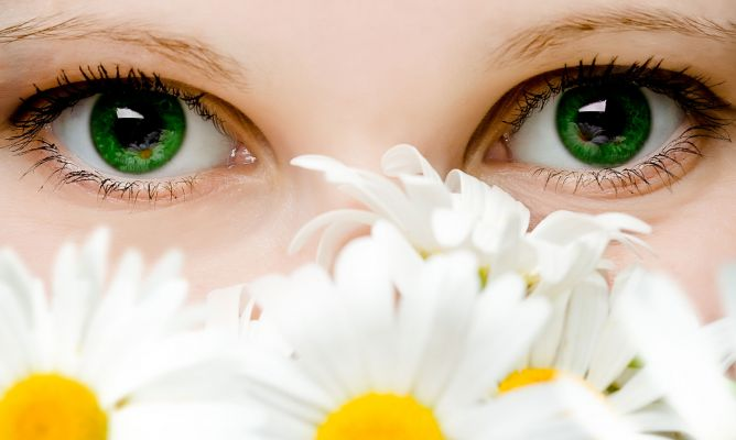camomille-yeux-fatigués-