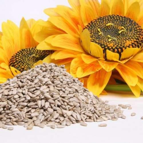 Remèdes naturels pour arrêter de fumer : graines de tournesol
