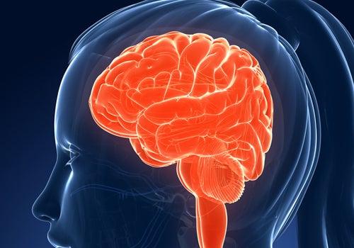 du cerveau