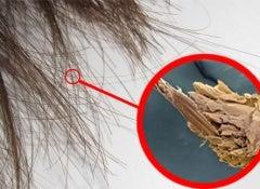Cheveux-pointes-abimées