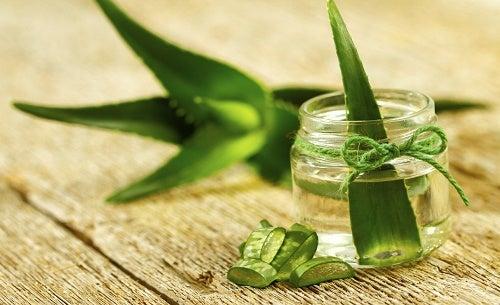 Comment cultiver de l\'aloe vera à la maison ? - Améliore ta Santé