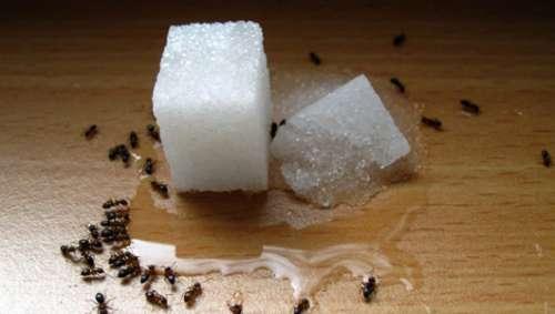 Les anti fourmis naturels et conomiques am liore ta sant for Anti fourmi naturel maison