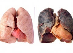 Poumons-propres-et-sains