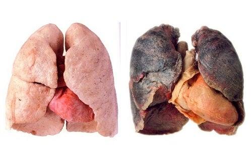 Des astuces pour avoir des poumons plus sains