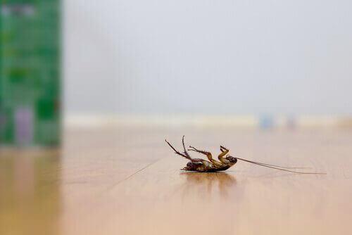 Chasser Les Cafards astuces pour repousser naturellement les cafards - améliore ta santé