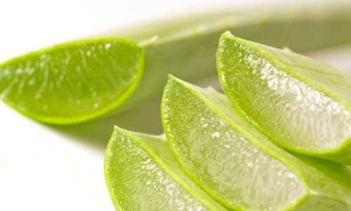 Aloe vera et douleurs de l'arthrite