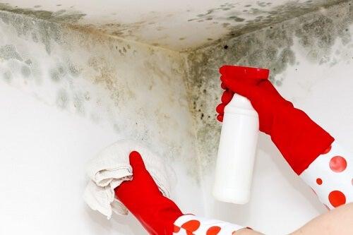 Astuces maison pour éliminer la moisissure