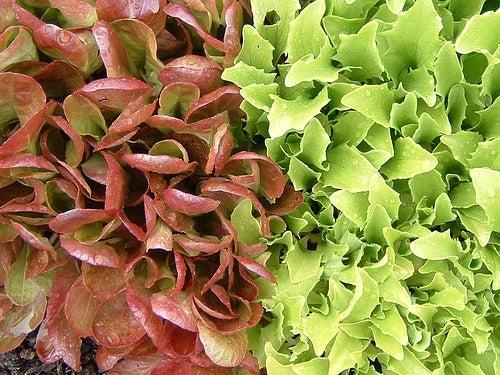 La salade fait partie des aliments à ne pas consommer le soir.