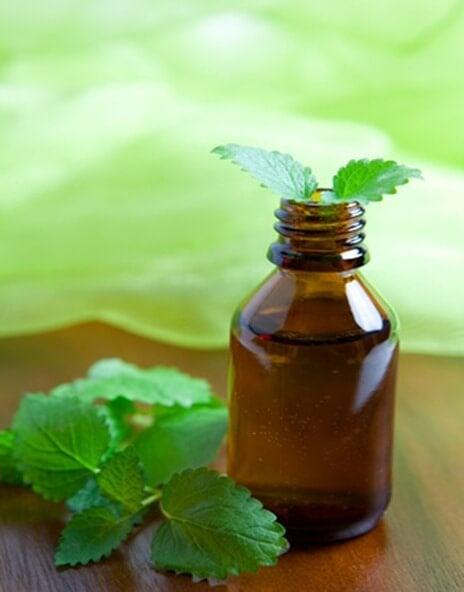 feuille et huile de menthe pour traiter les varices