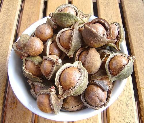 Bienfaits-des-noix-de-Macadamia-500x425