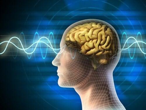Un décalogue pour maintenir votre cerveau jeune et en forme