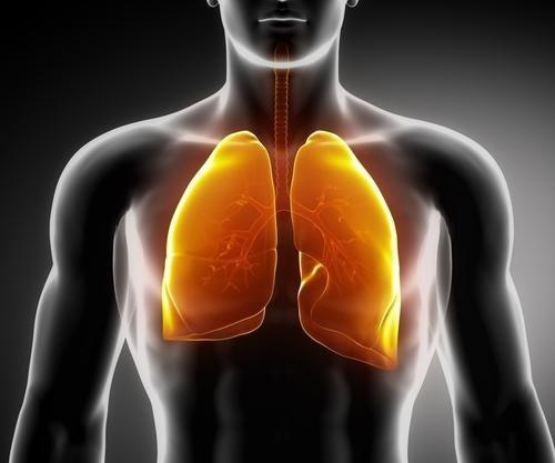 3 infusions médicinales pour fortifier les poumons