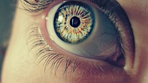 7 informations étonnantes sur nos pupilles